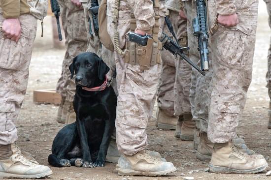 軍人,動物,ほっこり,画像,まとめ011