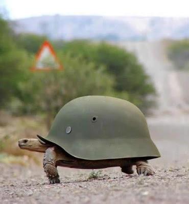 軍人,動物,ほっこり,画像,まとめ018