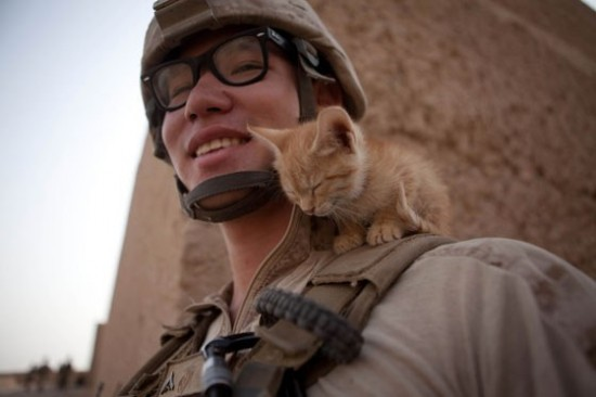 軍人,動物,ほっこり,画像,まとめ024