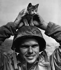 軍人,動物,ほっこり,画像,まとめ034