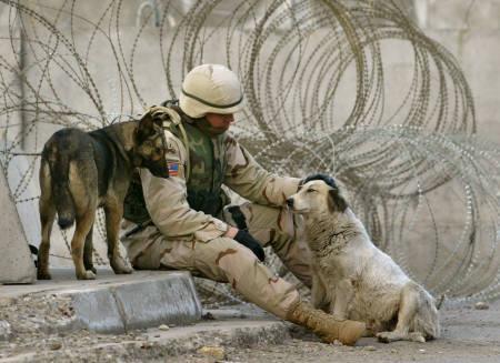 軍人,動物,ほっこり,画像,まとめ056