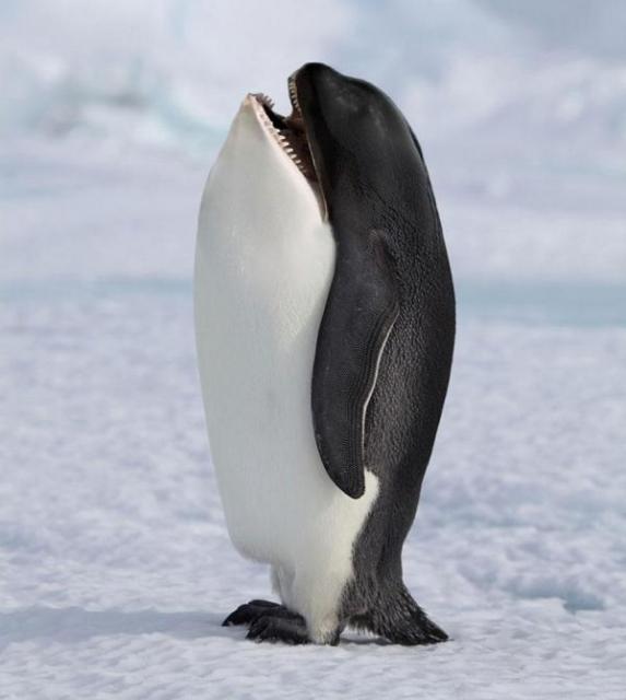動物,合成写真,まとめ010