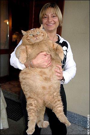 ダイエット,デブ猫,画像,まとめ003