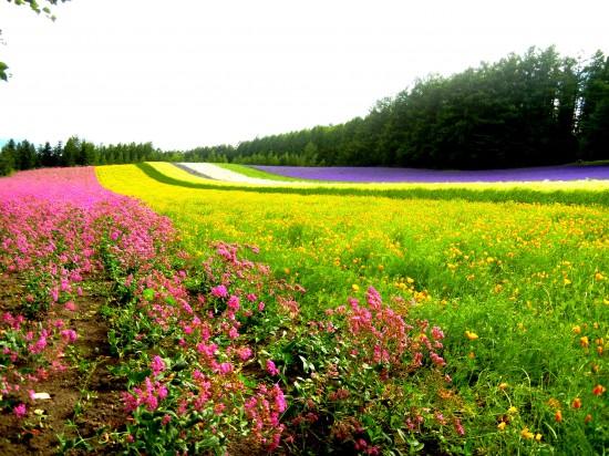世界,絶景,花畑,画像,まとめ006