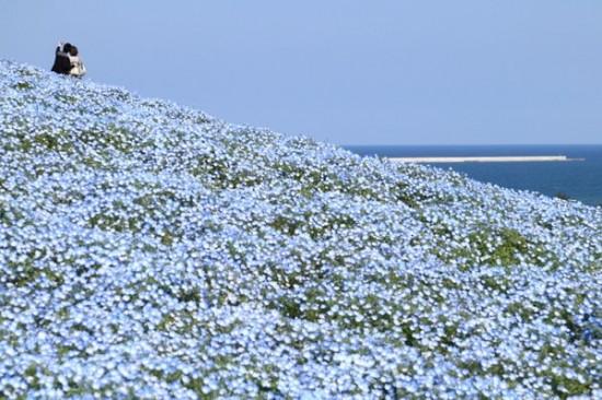 世界,絶景,花畑,画像,まとめ011