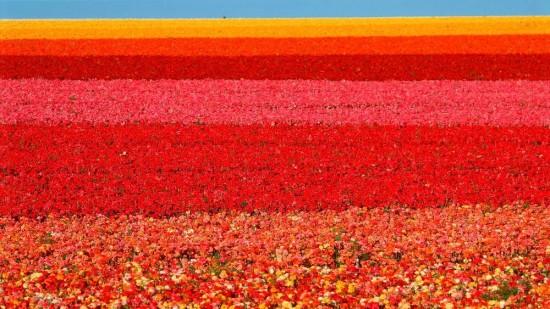 世界,絶景,花畑,画像,まとめ012