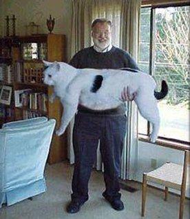 ダイエット,デブ猫,画像,まとめ012
