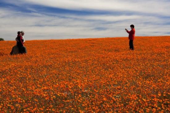 世界,絶景,花畑,画像,まとめ013