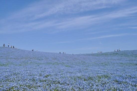 世界,絶景,花畑,画像,まとめ016