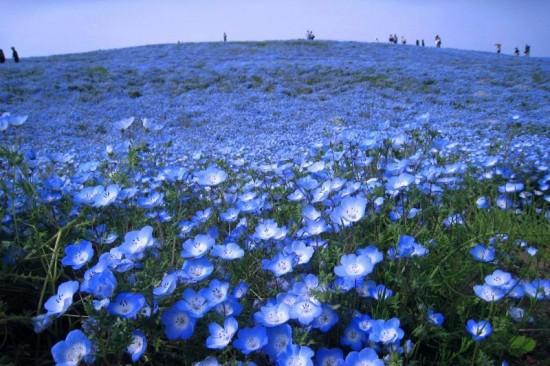 世界,絶景,花畑,画像,まとめ017