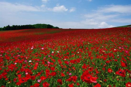 世界,絶景,花畑,画像,まとめ018