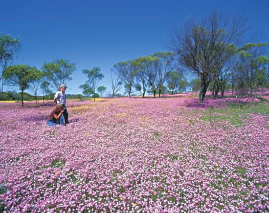 世界,絶景,花畑,画像,まとめ019