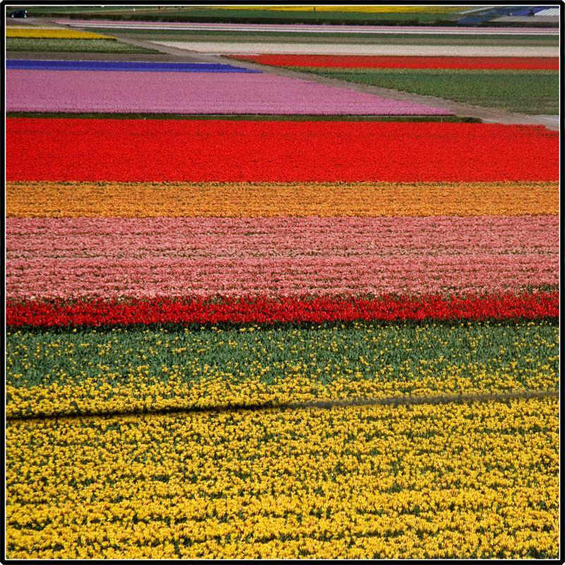 世界,絶景,花畑,画像,まとめ020