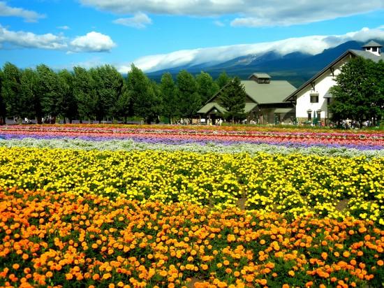 世界,絶景,花畑,画像,まとめ021