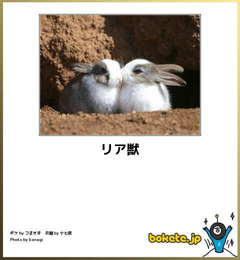 笑える,ウサギ,bokete,ボケて,画像,まとめ001
