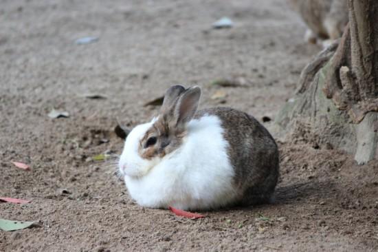 うさぎ,ウサギ,画像,まとめ001