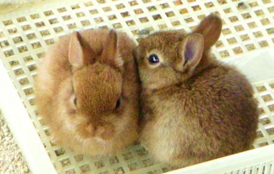 ウサギ,おしくらまんじゅう,集合,画像,まとめ001