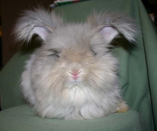 モフモフ,ウサギ,画像,まとめ001