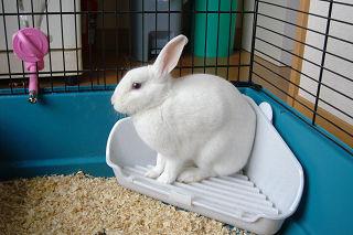 うさぎ,ウサギ,画像,まとめ002