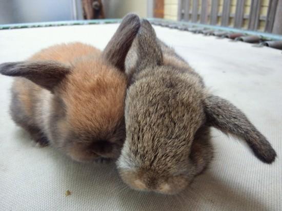 ウサギ,おしくらまんじゅう,集合,画像,まとめ002