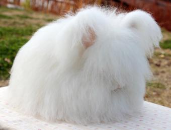 モフモフ,ウサギ,画像,まとめ002