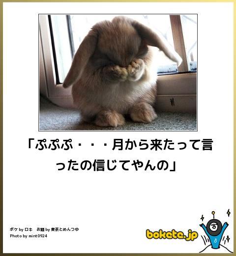 笑える,ウサギ,bokete,ボケて,画像,まとめ002