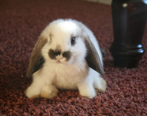 かわいらしい,子ウサギ,画像,まとめ002