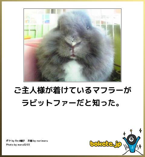 笑える,ウサギ,bokete,ボケて,画像,まとめ003
