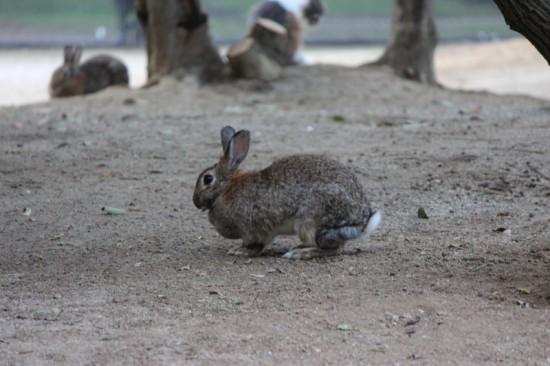 うさぎ,ウサギ,画像,まとめ004
