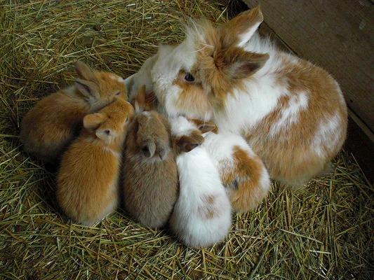 ウサギ,おしくらまんじゅう,集合,画像,まとめ004