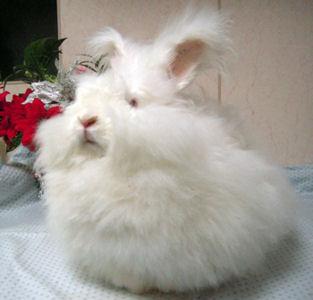 モフモフ,ウサギ,画像,まとめ004