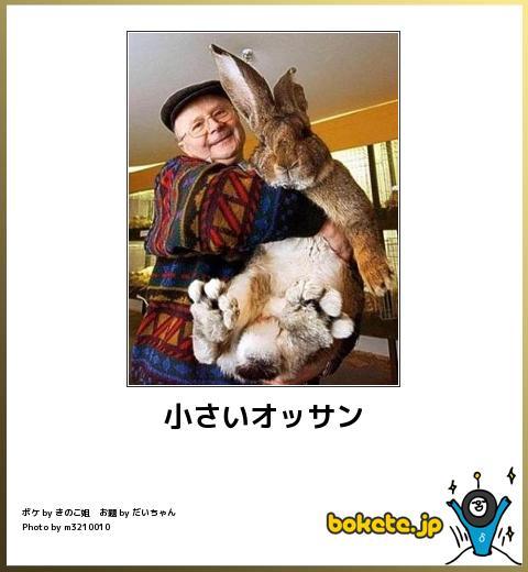 笑える,ウサギ,bokete,ボケて,画像,まとめ004