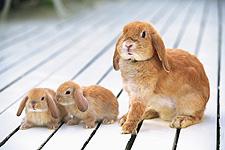 うさぎ,ウサギ,画像,まとめ005