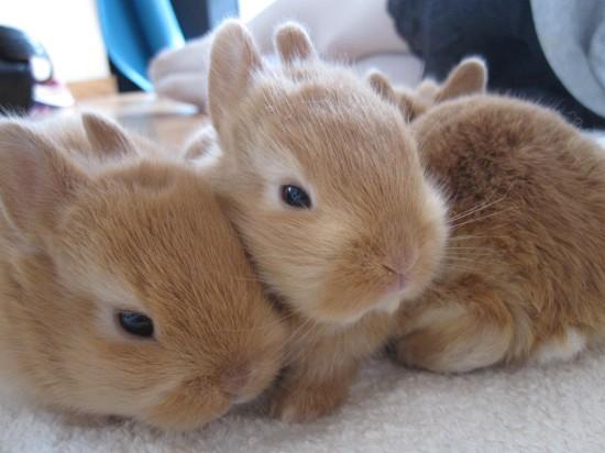ウサギ,おしくらまんじゅう,集合,画像,まとめ005