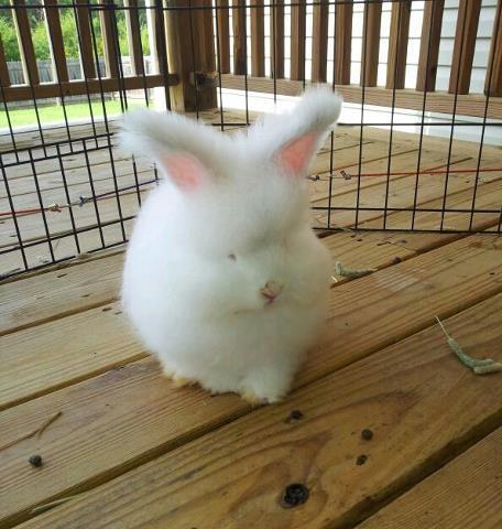モフモフ,ウサギ,画像,まとめ005