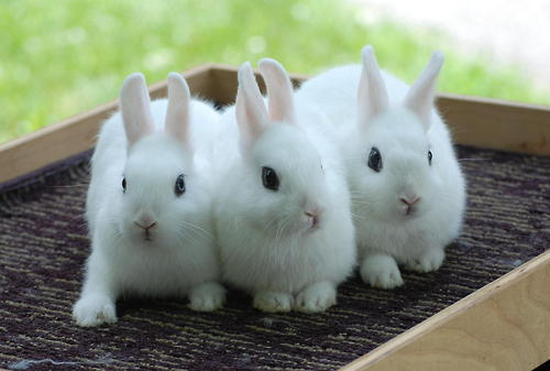 ウサギ,おしくらまんじゅう,集合,画像,まとめ006