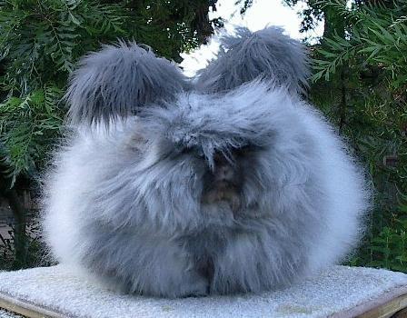 モフモフ,ウサギ,画像,まとめ006