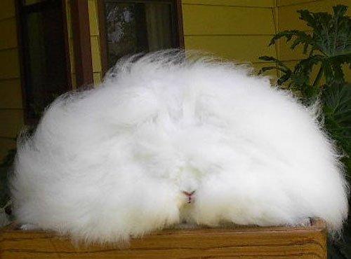 モフモフ,ウサギ,画像,まとめ007