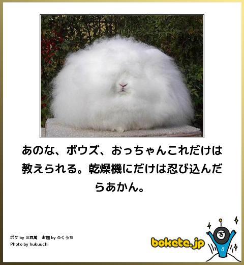 笑える,ウサギ,bokete,ボケて,画像,まとめ007