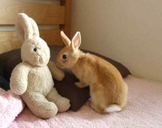 うさぎ,ウサギ,画像,まとめ008