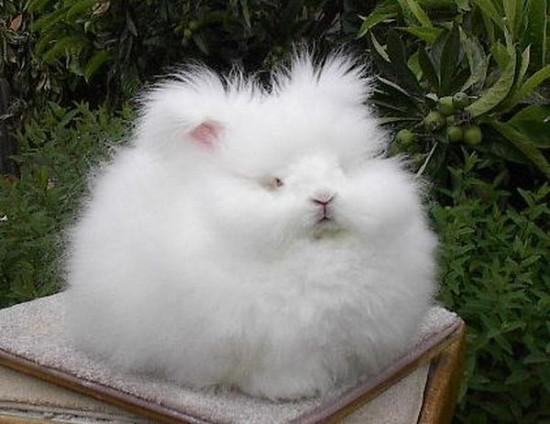 モフモフ,ウサギ,画像,まとめ008
