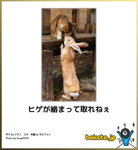 笑える,ウサギ,bokete,ボケて,画像,まとめ008