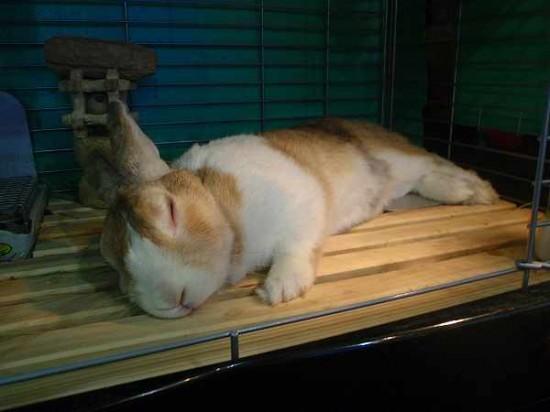 癒し,ウサギ,寝顔,画像,まとめ009