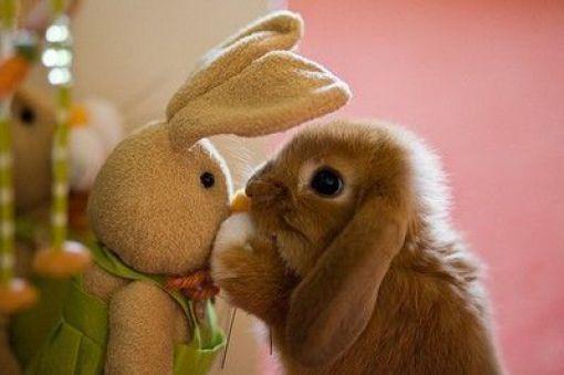 うさぎ,ウサギ,画像,まとめ009