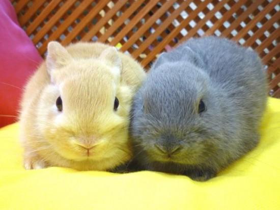 ウサギ,おしくらまんじゅう,集合,画像,まとめ009