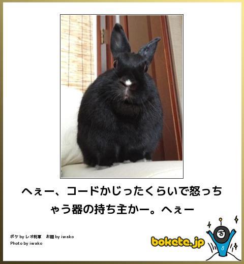 笑える,ウサギ,bokete,ボケて,画像,まとめ009