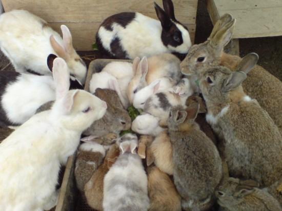 ウサギ,おしくらまんじゅう,集合,画像,まとめ010