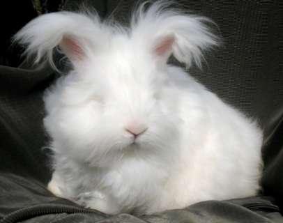モフモフ,ウサギ,画像,まとめ010