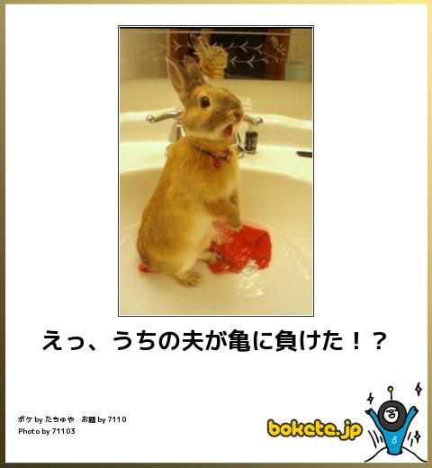笑える,ウサギ,bokete,ボケて,画像,まとめ010