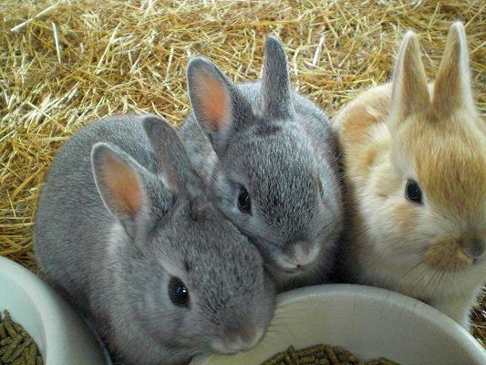 ウサギ,おしくらまんじゅう,集合,画像,まとめ011